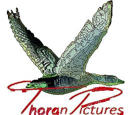 Thoran Pictures voor uw persoonlijke fotoshoot Logo